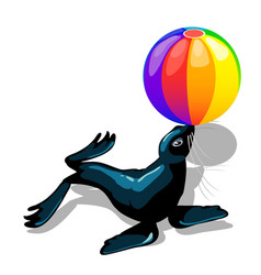 Circus animal sea lion with colorful ball isolated vector