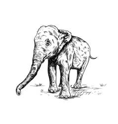 old big elephant on the white background vector image
