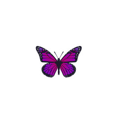 Realistic violet wing element vector