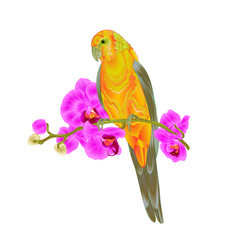 Sun conure parrot tropical bird vector