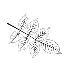 Walnut leaf vector