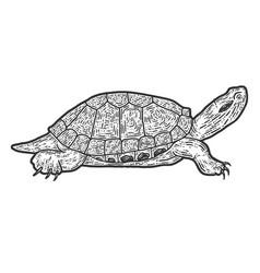 Animal reptile tortoise sketch scratch board vector