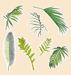 set stickers and icons tropical palm vector image