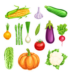 Vegetable watercolor icon of organic farm veggies vector