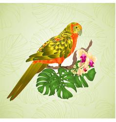 sun conure parrot tropical exotic bird vector image