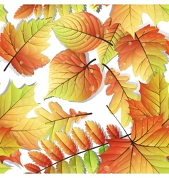 Colorful autumn seamless leaves isolated EPS 10 vector image vector image