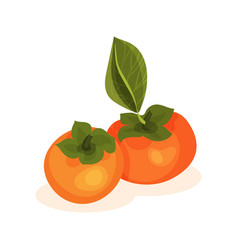 Flat icon of two ripe persimmons bright vector