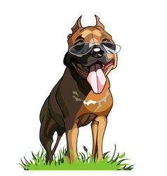 redhead dog with glasses with his tongue hanging vector image