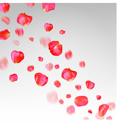 a lot of falling red rose petals on transparent vector image