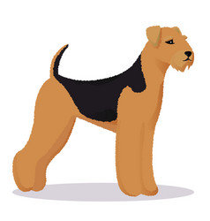 Airedale dog vector