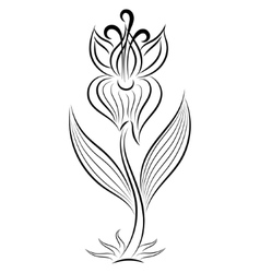 Doodle hand drawn gladiolus vector