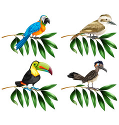 Four types of wild birds on branch vector