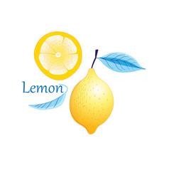 fruit yellow lemon vector image