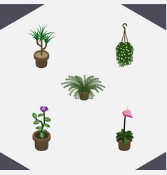 isometric houseplant set of plant flower grower vector image