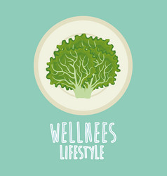 Lettuce vegetable wellness lifestyle vector