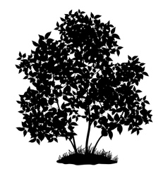 Lilac tree and grass silhouette vector