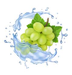 white grape in water splash realistic branch vector image