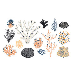 collection of various corals and seaweed or algae vector image vector image