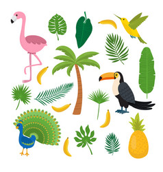 toucan hummingbird and flamingo summer tropical vector image
