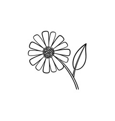 daisy flower hand drawn sketch icon vector image