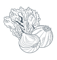 Lettuce and onion hand draw vector