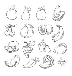 sketch doodle hand drawn fresh and juicy fruits vector image