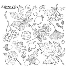 Black and white autumn falling leaves and berries vector