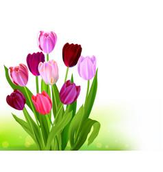 Bouquet tulip spring banner vector