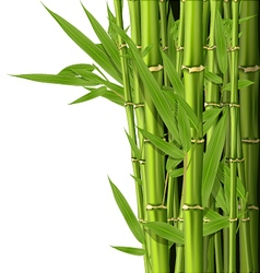 Green bamboo stems with leaves - grove vector