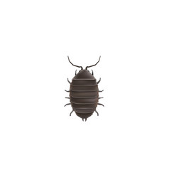 Realistic bug element of vector