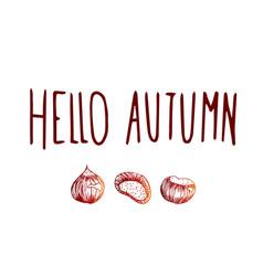 Sweet autumn chestnuts vector