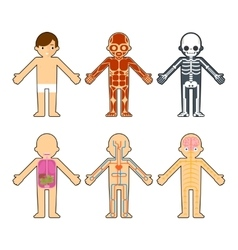 Body anatomy for kids vector
