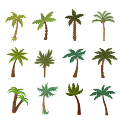 California palm trees summer tropical plant vector