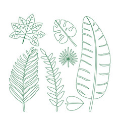 leaves and flowers vector image