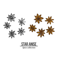 Spice collection star anise hand drawn vector