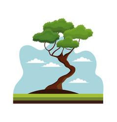 bonsai tree nature decoration landscape vector image