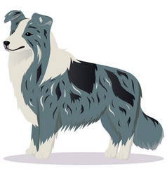 Border collie dog marble vector