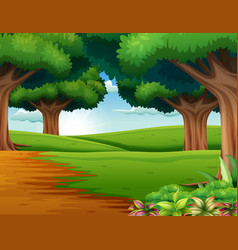 cartoon of the forest scene with many trees vector image