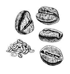 Hand drawn set of coffee beans sketch vector
