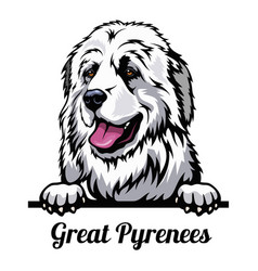 Head great pyrenees - dog breed color image a vector