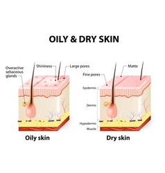 Oily and dry skin Different vector