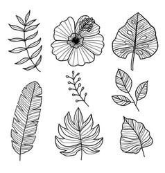 Set botanical hand drawn style vector