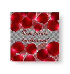 Background brochure with rose petals vector