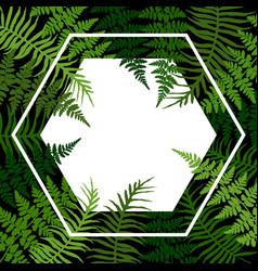 green bracken new zealand fern tropical forest vector image