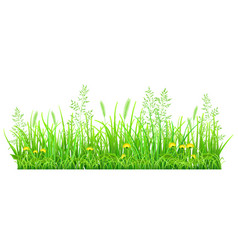 green grass with dandelions vector image vector image
