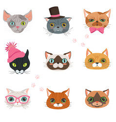 set funny cats heads different breeds vector image