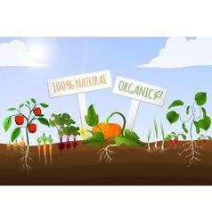 Vegetable garden poster vector image vector image
