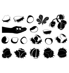 set of different horse chestnuts vector image