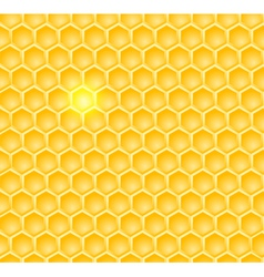 brightcomb vector image vector image