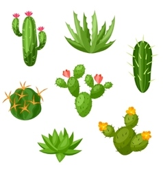 Collection of abstract cactuses and plants vector image vector image